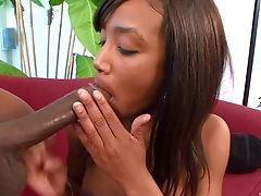 Black, Bold, Couple, Doggystyle, Ebony Pussy, Natural Tits, Rough, Shaved Pussy,